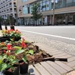 【恒例!花植え】季節の花を楽しんで下さい!