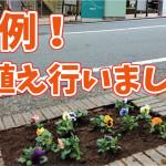 【花植え】寒さを吹き飛ばせ!恒例の花植え